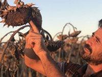 Çiftçinin yüzü yağlık ayçiçeğiyle gülüyor