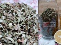 Şifa deposu kekik çayının faydaları saymakla bitmiyor