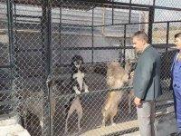Pursaklar hayvan barınağı yenilendi