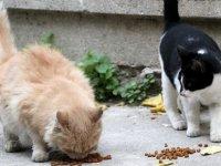 o kedilere mahalleli sahip çıktı