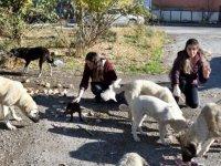 Öğretmenler sokak hayvanlarının 'can dostu' oldu