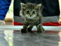 Büyükşehir Belediyesi'nden hayvanlara ilk yardım eğitimi