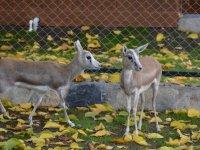 Keçiören Ihlamur Vadisi'ne yeni hayvanlar geldi