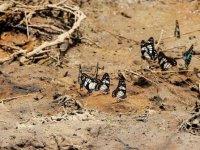 Kelebek yetiştirerek hem doğaya hem ailelerine sahip çıkıyorlar