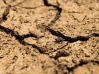 Dünya her yıl 24 milyar ton toprak kaybediyor
