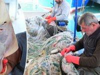İnsan yüzlü sapan balığının nesli tehlike altında
