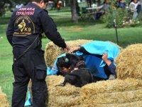 Büyükşehir'in K-9 köpekleri girdikleri sınavı geçtiler
