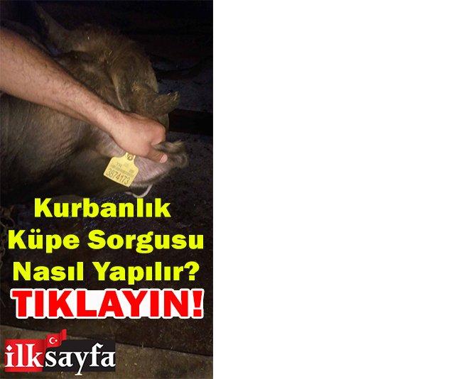 kurban-kupe-numarasi-002.jpg