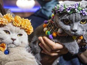 3. Uluslararası Pursaklar Kedi Güzellik Festivali