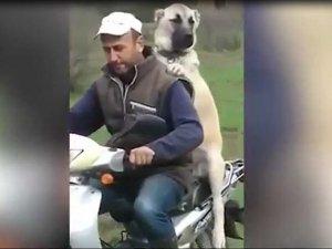 Kangalın motosiklet keyfi kamerada