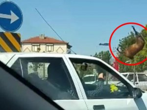 Eskişehir'de feci kaza: Yüzlerce kiloluk at böyle uçtu!