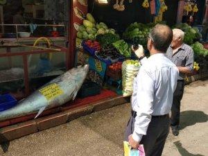 Elazığ'da, 241 kiloluk orkinos satışa çıkarıldı