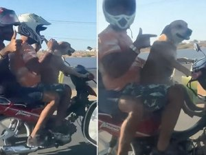 Motosiklet süren köpek kamerada