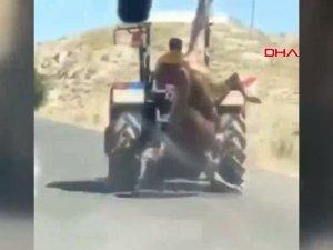 """""""Kabul Edilemez Görüntü"""", Kestiği kurbanlı traktörün arkasında asılı götürdü"""
