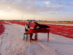 Müzik öğretmenleri, domates tarlasında keman ve piyano çalıp klip çekti