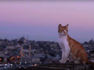 İstanbul'un sokak kedileri