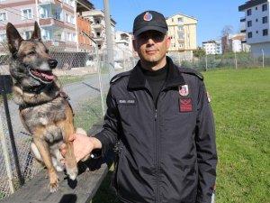"""Jandarma köpeği """"Fora"""" suçlulara göz açtırmıyor"""