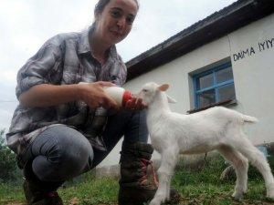 İki dil bilen 'Nişantaşı kızı' köyde keçi güdüyor