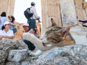 Antik kent sahipsiz kedilere yuva oldu